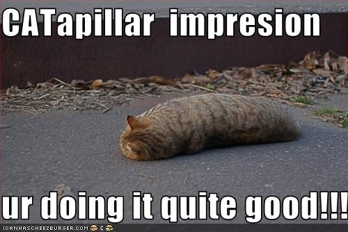 caterpillar,doin it rite,look a like