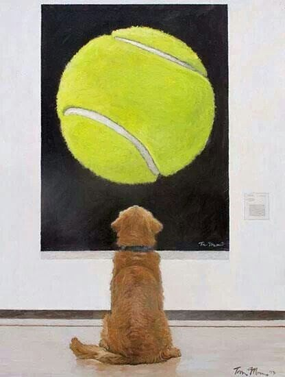 dogs photos tennis ball - 2345733