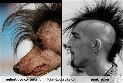 dogs mohawk punk rocker ugly
