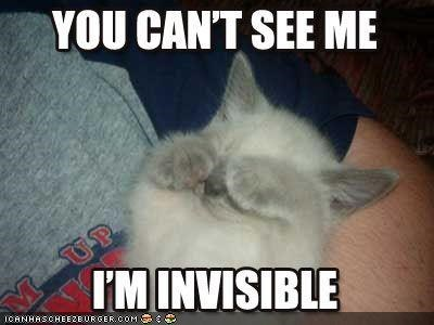 cute furry gray invisible lolcat - 2347806976