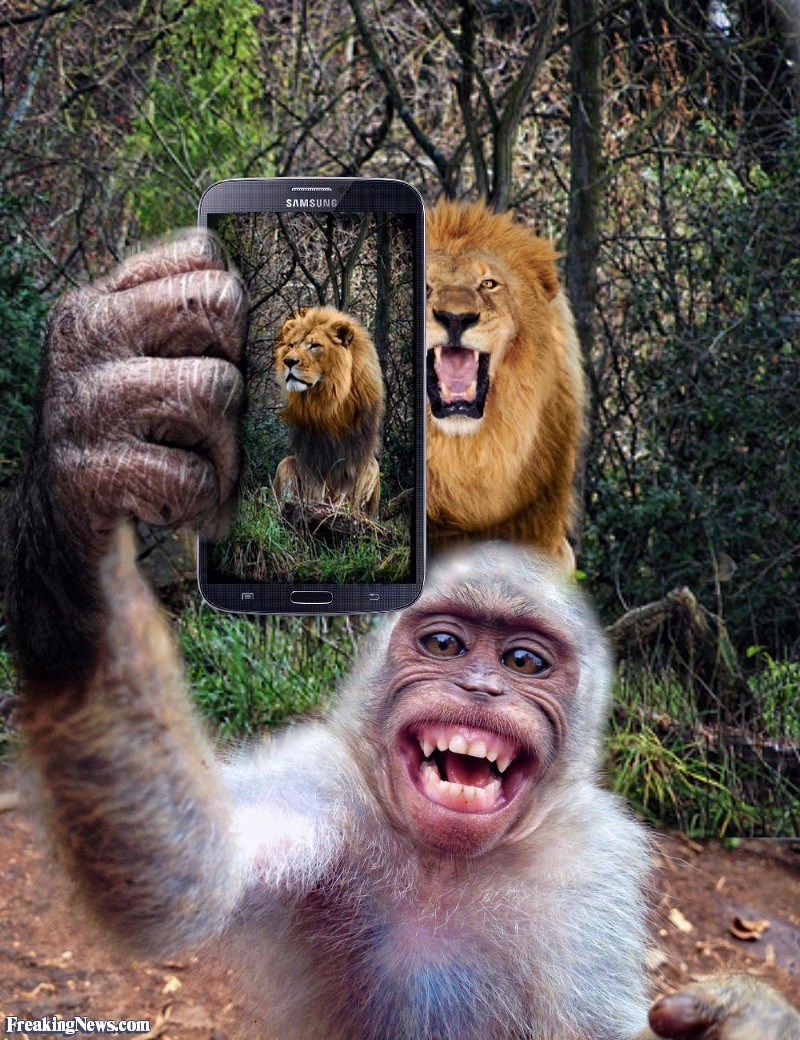 17 photos of animals using cellphones