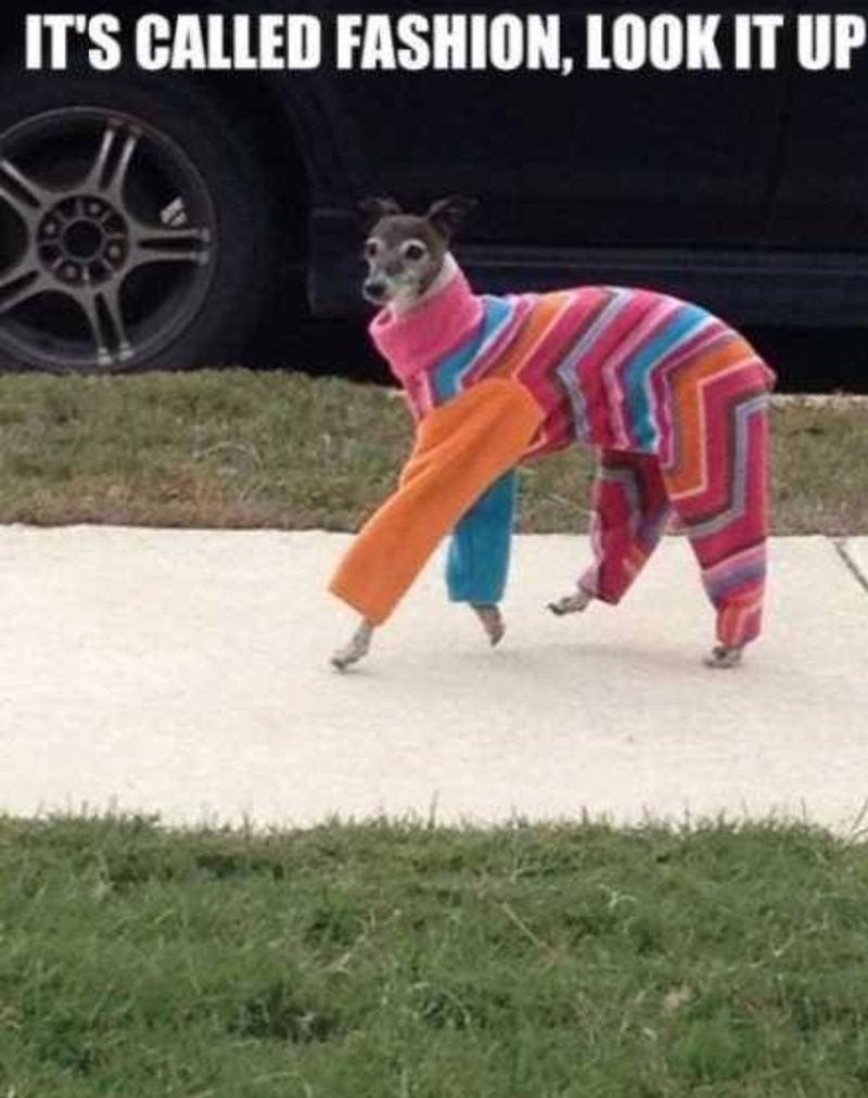 A dog dressed in a very ugly and colorful sweater saying we don't know what fashion is - cover photo for a list of funny memes of dogs that we can relate too