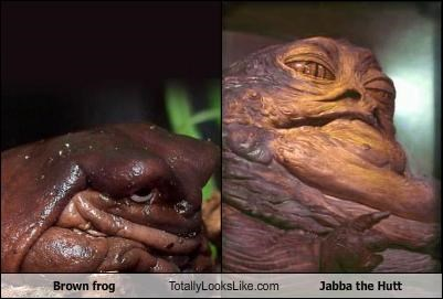 animals brown frog jabba the hutt star wars - 2351458560