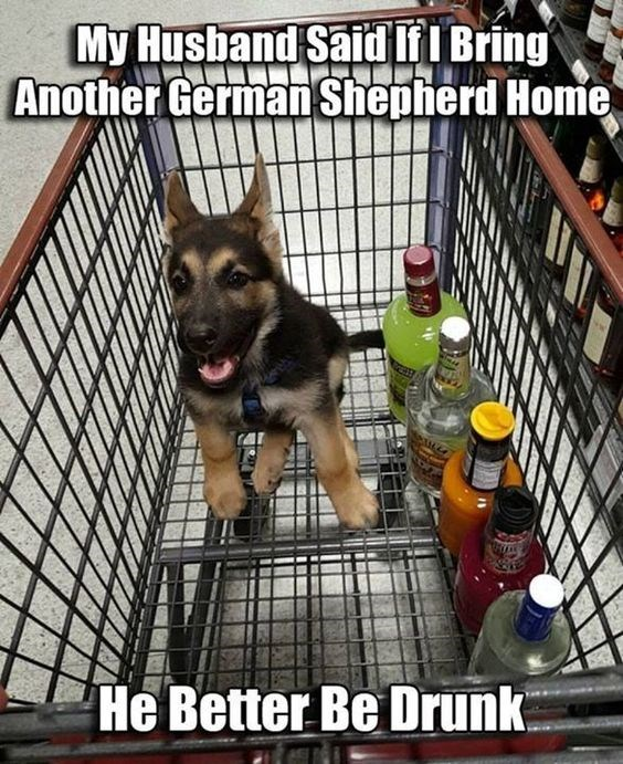 Funny image of a puppy in a shopping cart with a lot of bottles of alcohol - cover photo for a list of funny memes of women bringing home dogs when they weren't meant to