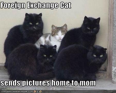 momcat photos school vacation - 2351959808