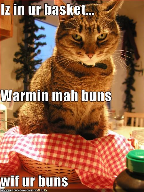 annoying,bad cat,buns