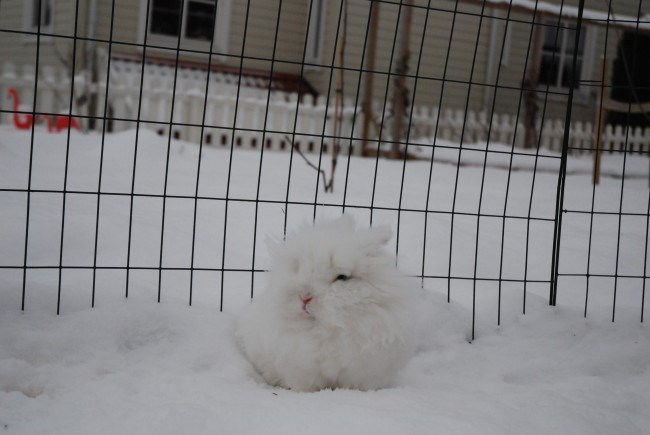 Bunday,bunnies,list,snow,squee,rabbits