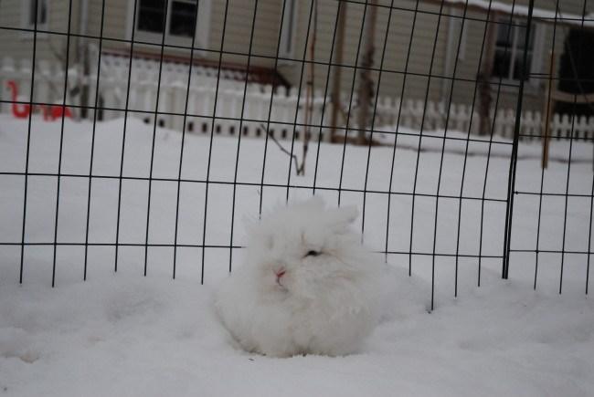 Bunday bunnies list snow squee rabbits - 23557