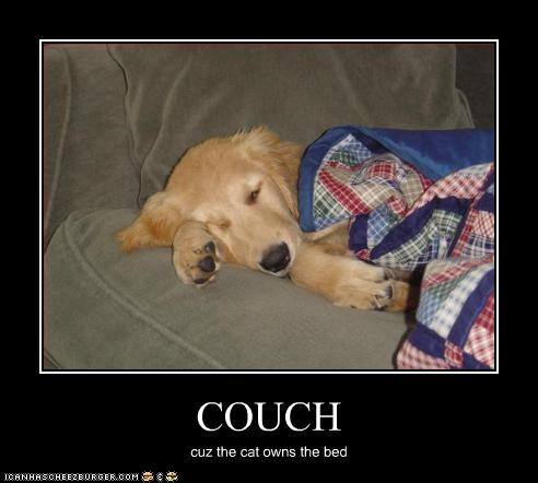 bed couch golden retriever lolcats - 2355900672