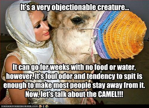 It's a very objectionable creature... It can go for weeks with no food or water, however, it's foul odor and tendency to spit is enough to make most people stay away from it. Now, let's talk about the CAMEL!!!