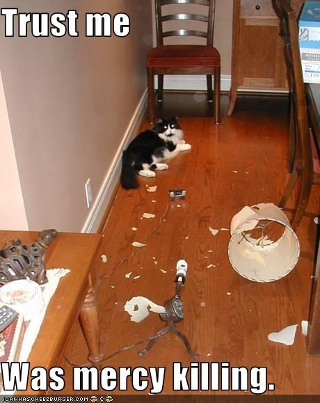 bad cat,destruction,lamp,mess,murder