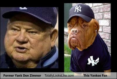 dogs don zimmer fans New York Yankees sports - 2359480064
