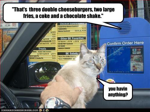 Cheezburger Image 2360417536