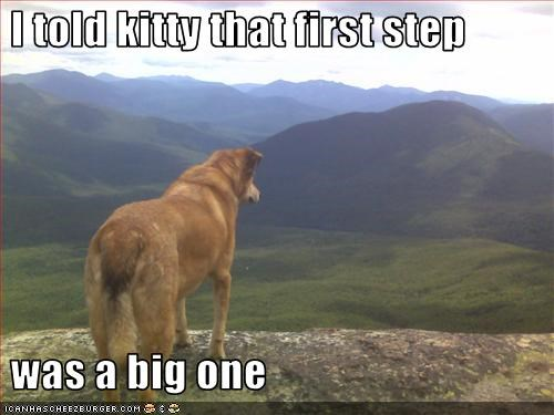 big fall kitten lolcats mountain steps whatbreed