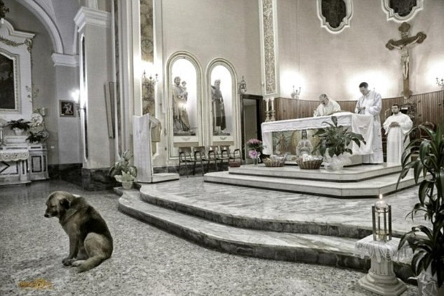 Loyal Dog attends church even after it's owner's death