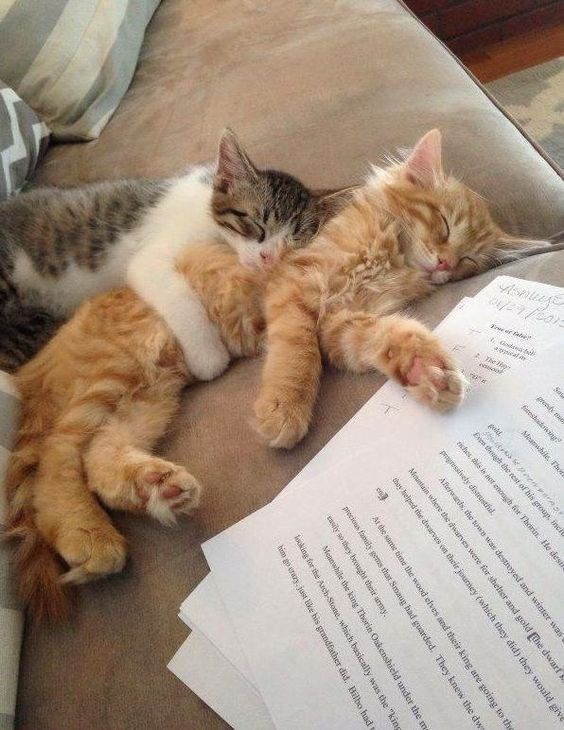 two kittens cuddling snoozing near unfinished homework on the couch - cover photo for a list of lovey dovey cats