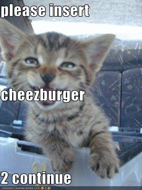 Cheezburger Image 2366283008