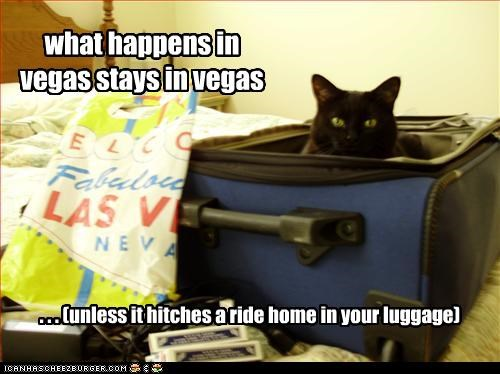 las vegas plotting suitcase vacation - 2367492352