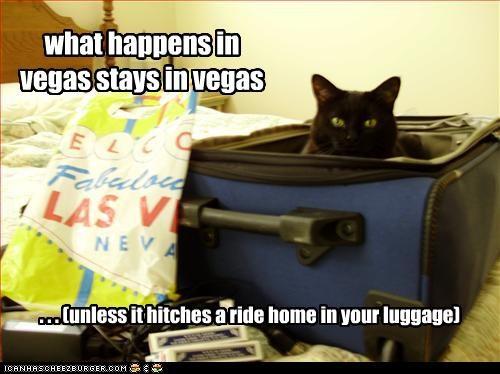 las vegas plotting suitcase vacation - 2367492352