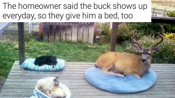 Collection of wholesome and cute memes and comics about love, friendship, relationships, believing in yourself, overcoming depression, dogs, animals, deer, goats, peacocks, raccoons, trash pandas, snuggling and love.