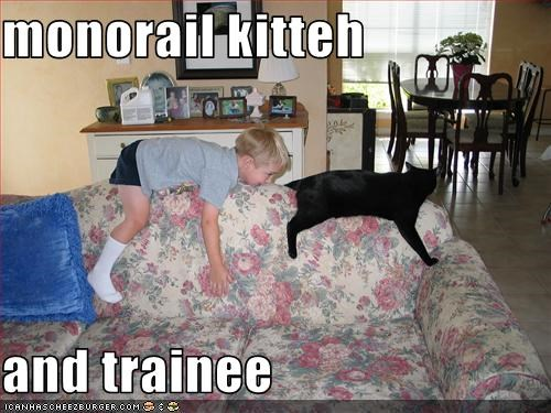 monorail cat,training