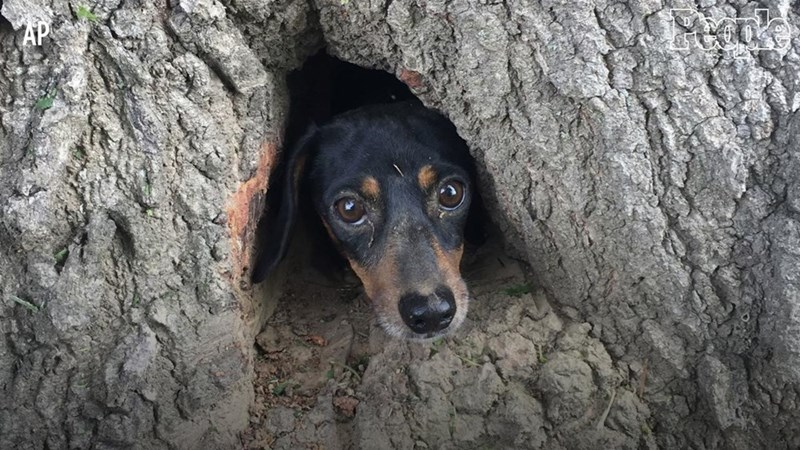 Firefighters rescued dog who was stuck in a tree