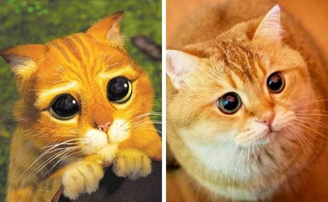animals that look like movie characters