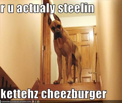 Cheezburger Image 2375772416