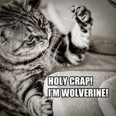 a photo of a kitten thats figured out he is like wolverine - cover photo for a list of cats that have realized something