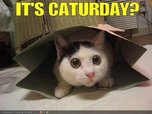 cat,Caturday,cute,Hall of Fame,kitten,lolcat,LOLs To Go