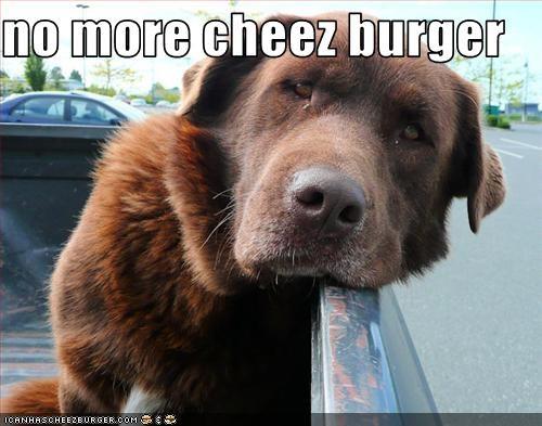 Cheezburger Image 2379944704