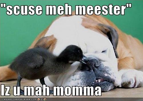 """""""scuse meh meester""""  Iz u mah momma"""
