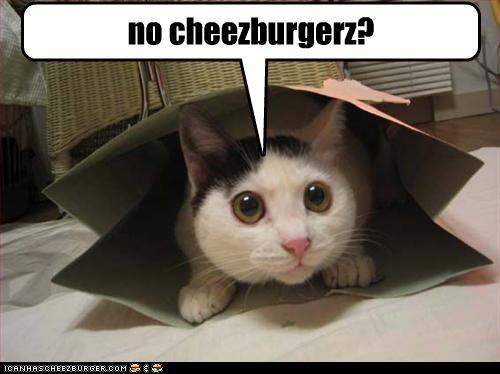 Cheezburger Image 2383774976