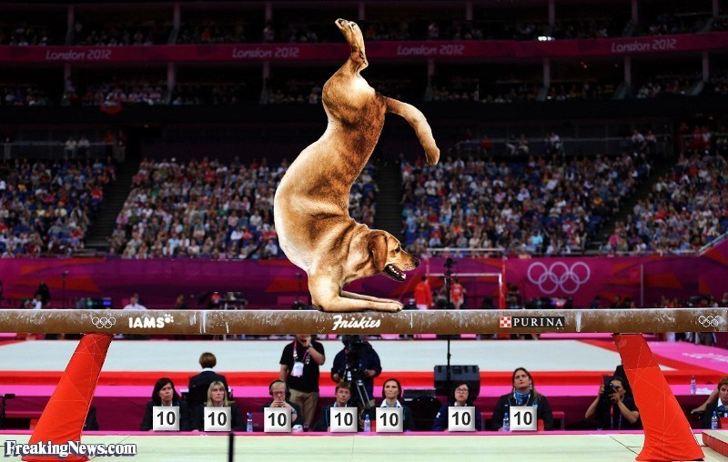 Photos of Animals participating in official sports