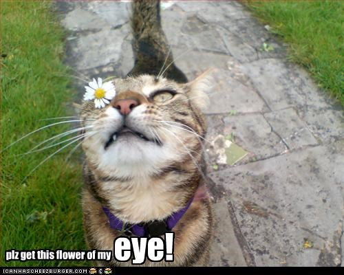 plz get this flower of my eye!