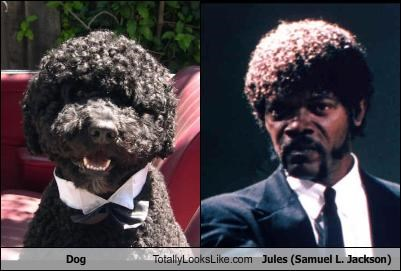 afro,animals,dogs,hair style,movies,pulp fiction,Samuel L Jackson