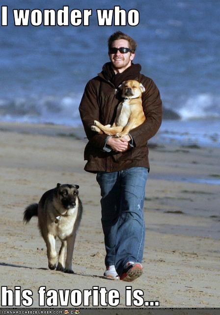 dogs favorites jake gyllenhaal the beach - 2387979008