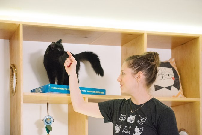 adorable story on a new cat cafe shelter opening up n lower manhattan and that has special classes for people to do yoga with cats