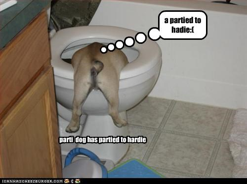a partied to hadie:( parti dog has partied to hardie