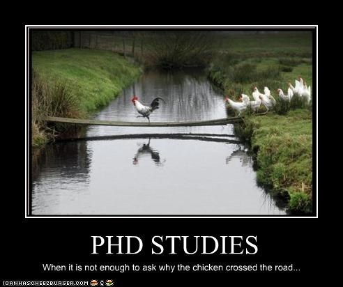Phd Studies Cheezburger Funny Memes Funny Pictures