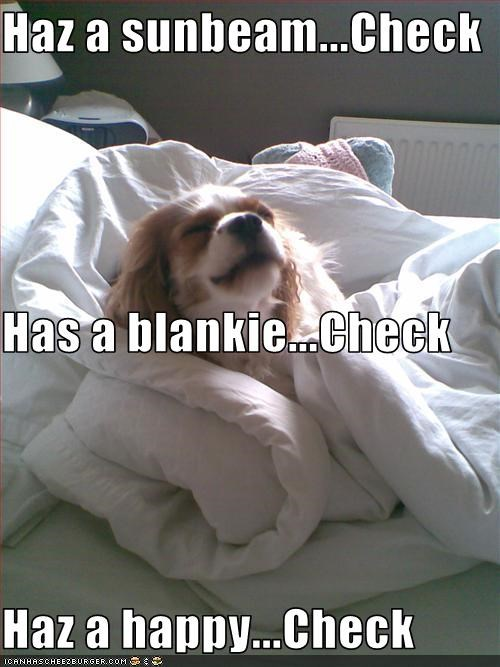 blanket cavalier king charles spaniel happy sunbathing - 2390725888
