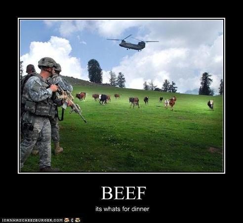 Cheezburger Image 2392357632