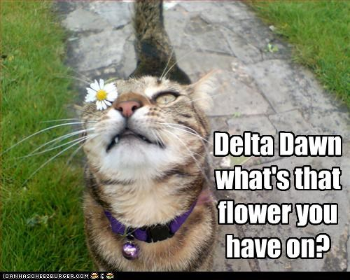 Helen Is Ready Delta Dawn what's that flower you have on?