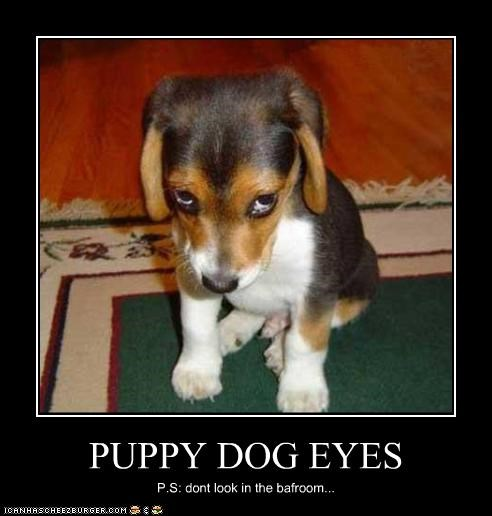 PUPPY DOG EYES P.S: dont look in the bafroom...