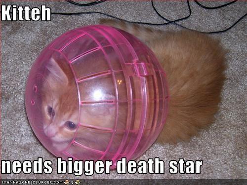 cute kitten movies star wars - 2396576512