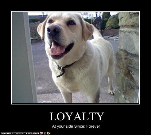 forever labrador loyalty mans-best-friend - 2396599040