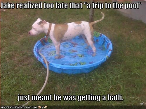 bath FAIL pitbull pool - 2396636928