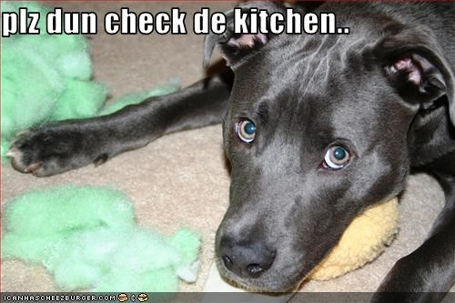 Cheezburger Image 2397428992