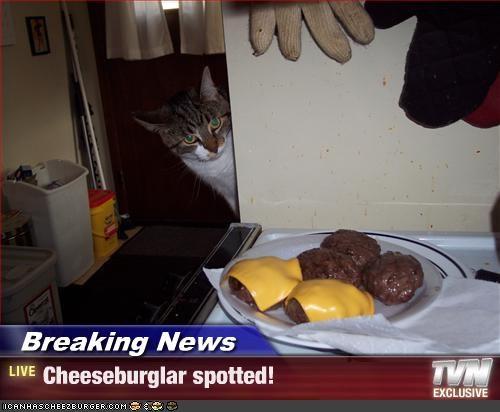 Cheezburger Image 2397771008