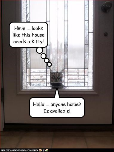 Hello ... anyone home? Iz available! Hmm ... looks like this house needs a Kitty!